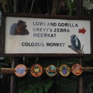 Heading to see the gorillas...