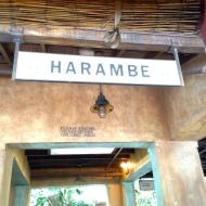 Back at the Harambe Station