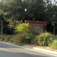 Arriving at Animal Kingdom Lodge