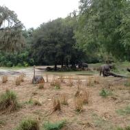 Ostrich and Rhinos