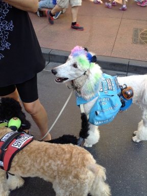 Service Dogs dressed up!